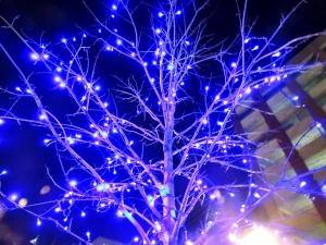 A random illuminated tree...